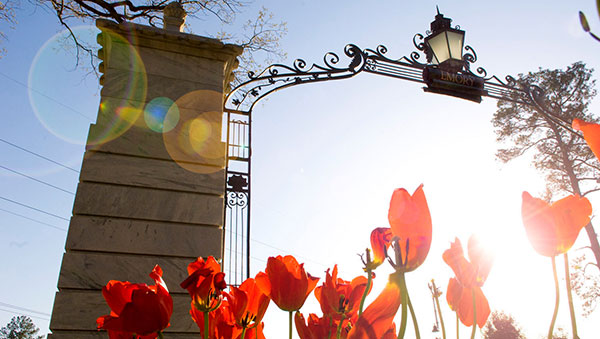 The Emory gate with tulips planted at the ground level